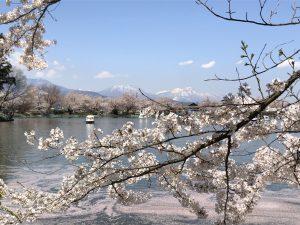 お花見 桜 臥竜公園3